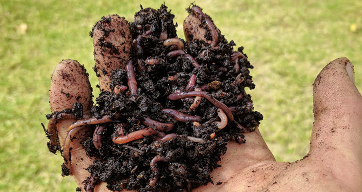 adding worms to compost