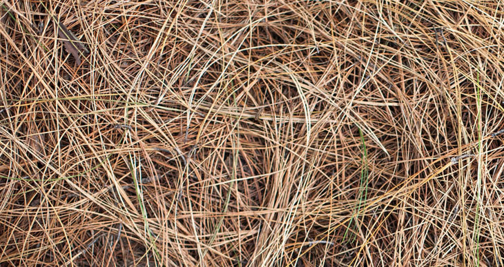 pine needles is a brown compost material