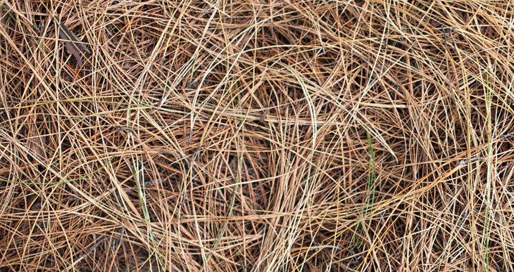 do pine needles make good compost