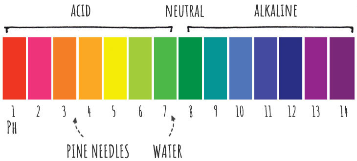 ph scale for pine needles