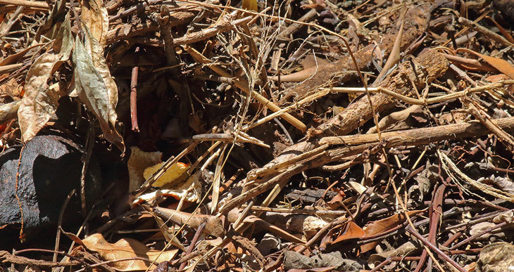 dry compost pile