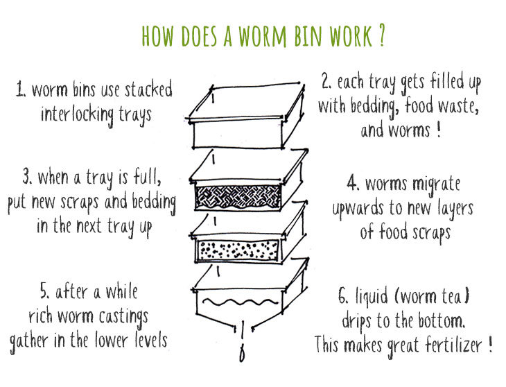 how does a worm bin work